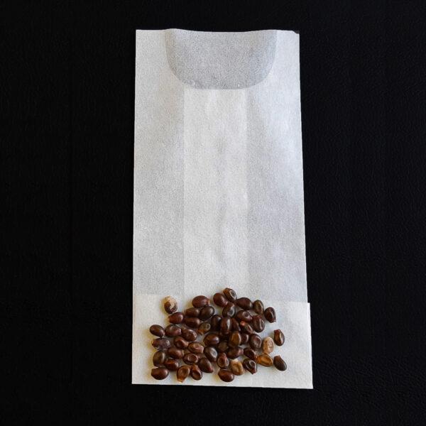 Viburnum edule - Bersarunni